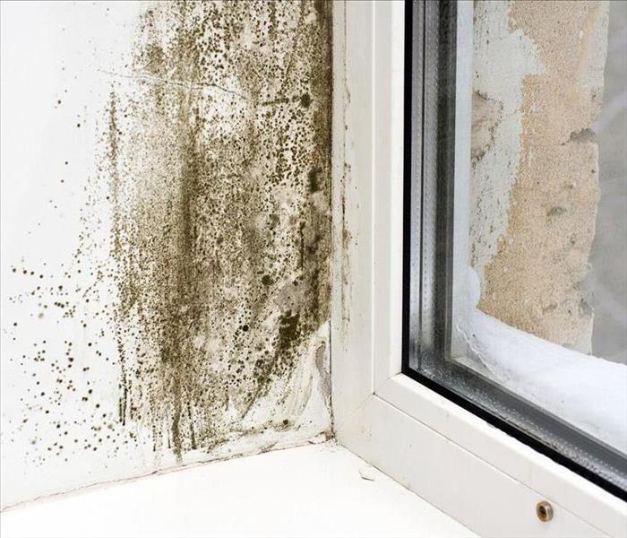 Mold Remediation Mold Removal Richmond - A Professional Guide to Mold Removal in Your Home