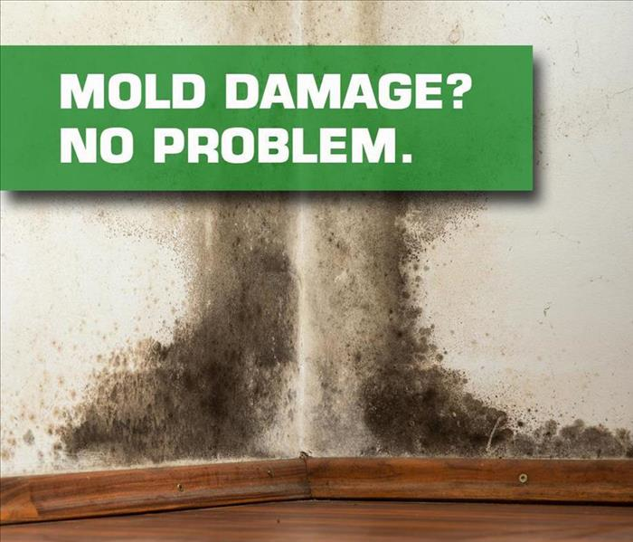 Mold Remediation How to Deal with Mold in Your Richmond Home